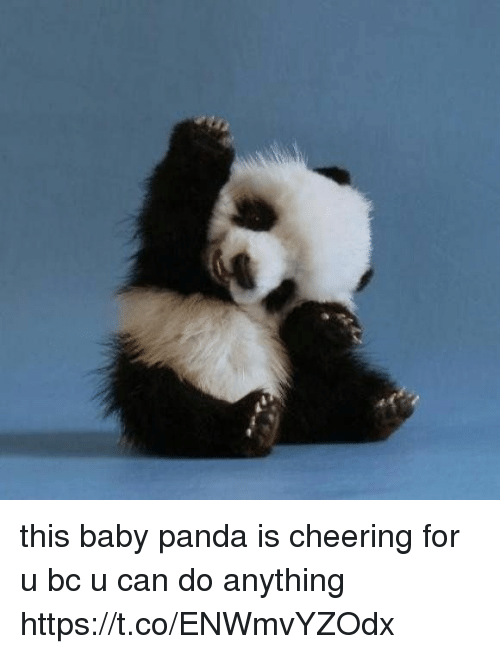 Panda, Girl Memes, and Baby: this baby panda is cheering for u bc u can do anything https://t.co/ENWmvYZOdx