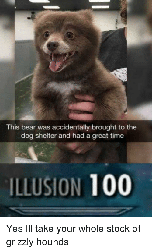 Anaconda, Bear, and Time: This bear was accidentally brought to the  dog shelter and had a great time  ILLUSION 100 Yes Ill take your whole stock of grizzly hounds