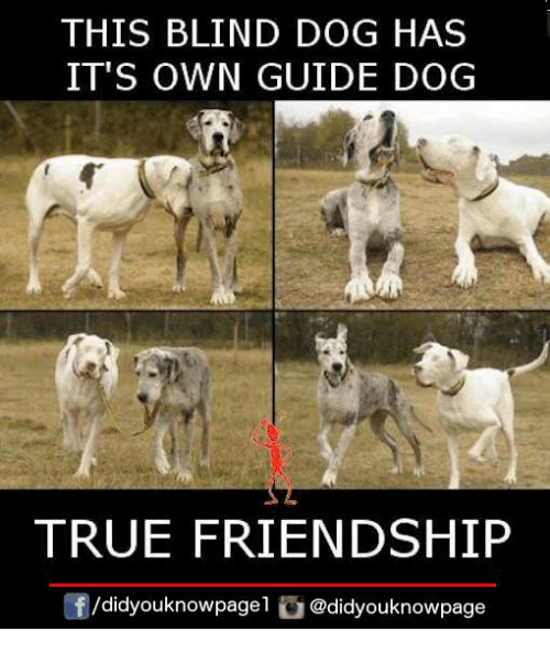 Blindes: THIS BLIND DOG HAS  IT'S OWN GUIDE DOG  TRUE FRIENDSHIP  囝/d.dyouknowpagel @didyouknowpage