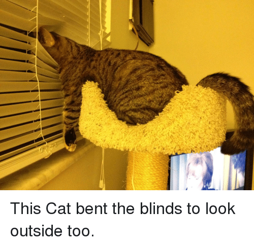 Hacha Want Nt You See You Orking Blind Do Blinds Meme On Esmemes Com