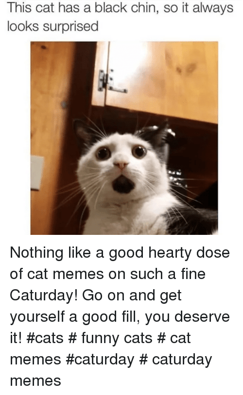 funny cats: This cat has a black chin, so it always  looks surprised Nothing like a good hearty dose of cat memes on such a fine Caturday! Go on and get yourself a good fill, you deserve it! #cats # funny cats # cat memes #caturday # caturday memes