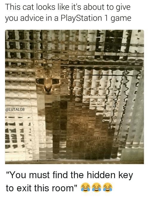 """Cat Look: This cat looks like it's about to give  you advice in a PlayStation 1 game  @LUTAL08 """"You must find the hidden key to exit this room"""" 😂😂😂"""