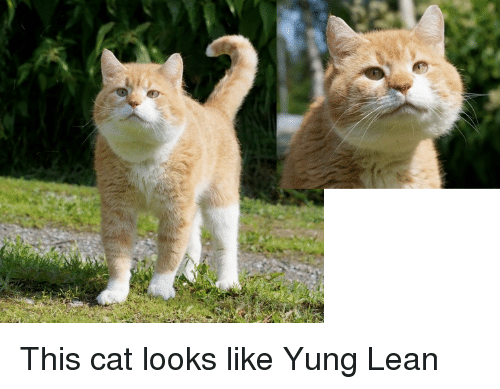 yung lean: This cat looks like Yung Lean