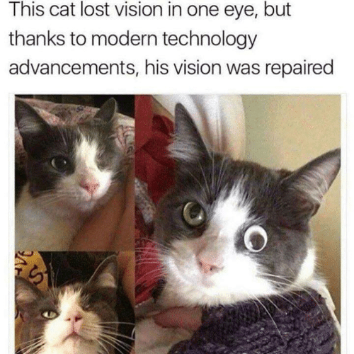 Memes, Lost, and Vision: This cat lost vision in one eye, but  thanks to modern technology  advancements, his vision was repaired