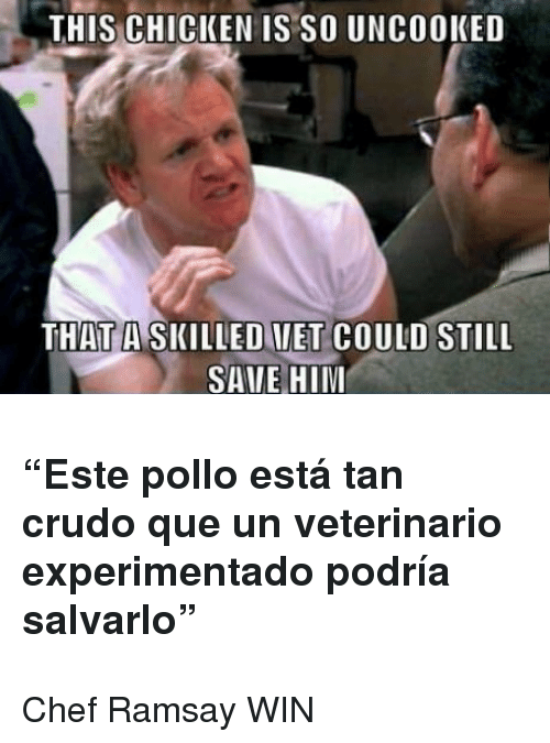 "Chef, Chicken, and Him: THIS CHICKEN IS SO UNCOOKED  THAT A SKILLEDVET COULD STILL  SAIE HIM <h3>""Este pollo está tan crudo que un veterinario experimentado podría salvarlo""</h3> <p>Chef Ramsay WIN</p>"