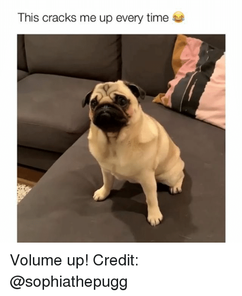 Volume Up: This cracks me up every time Volume up! Credit: @sophiathepugg