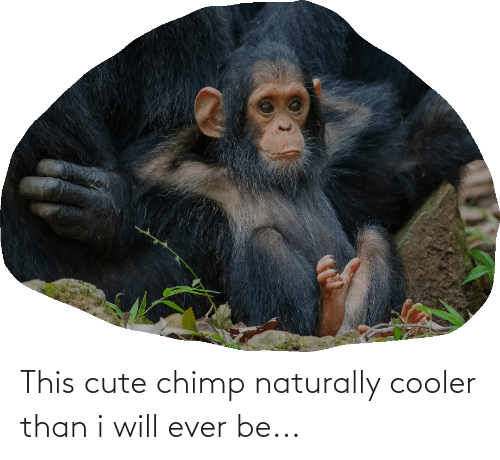 naturally: This cute chimp naturally cooler than i will ever be...
