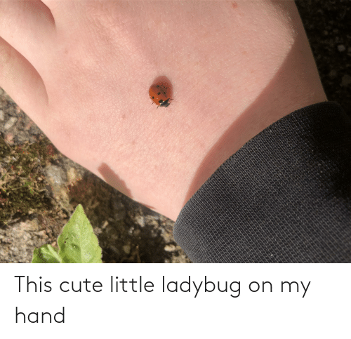 cute: This cute little ladybug on my hand