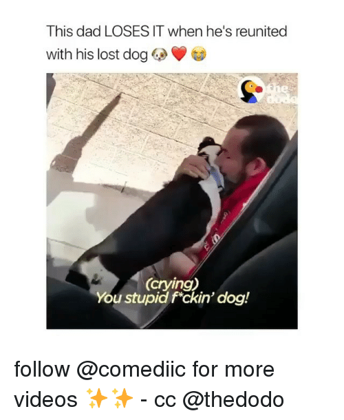 Crying, Dad, and Memes: This dad LOSES IT when he's reunited  with his lost dog  (crying)  You stupid fckin' dog! follow @comediic for more videos ✨✨ - cc @thedodo