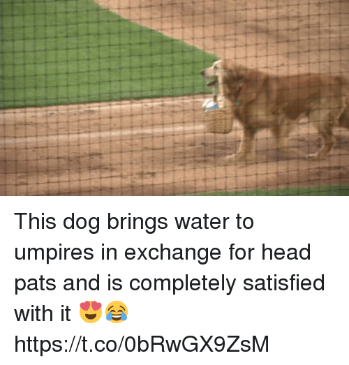 Head Pats: This dog brings water to umpires in exchange for head pats and is completely satisfied with it 😍😂 https://t.co/0bRwGX9ZsM