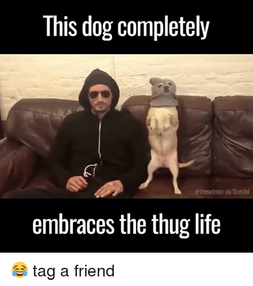 Thugs Life: This dog completely  ericsearlenyc via Storyful  embraces the thug life 😂 tag a friend