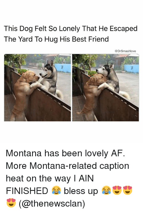 the yards: This Dog Felt So Lonely That He Escaped  The Yard To Hug His Best Friend  @DrSmashlove Montana has been lovely AF. More Montana-related caption heat on the way I AIN FINISHED 😂 bless up 😂😍😍😍 (@thenewsclan)