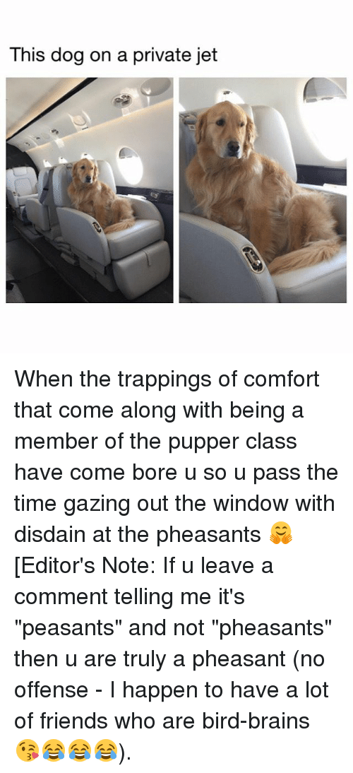"""Bored, Brains, and Friends: This dog on a private jet When the trappings of comfort that come along with being a member of the pupper class have come bore u so u pass the time gazing out the window with disdain at the pheasants 🤗 [Editor's Note: If u leave a comment telling me it's """"peasants"""" and not """"pheasants"""" then u are truly a pheasant (no offense - I happen to have a lot of friends who are bird-brains 😘😂😂😂)."""