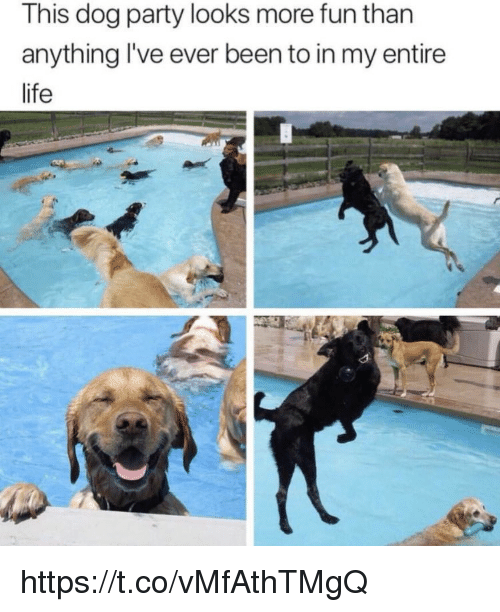 Life, Memes, and Party: This dog party looks more fun than  anything I've ever been to in my entire  life https://t.co/vMfAthTMgQ