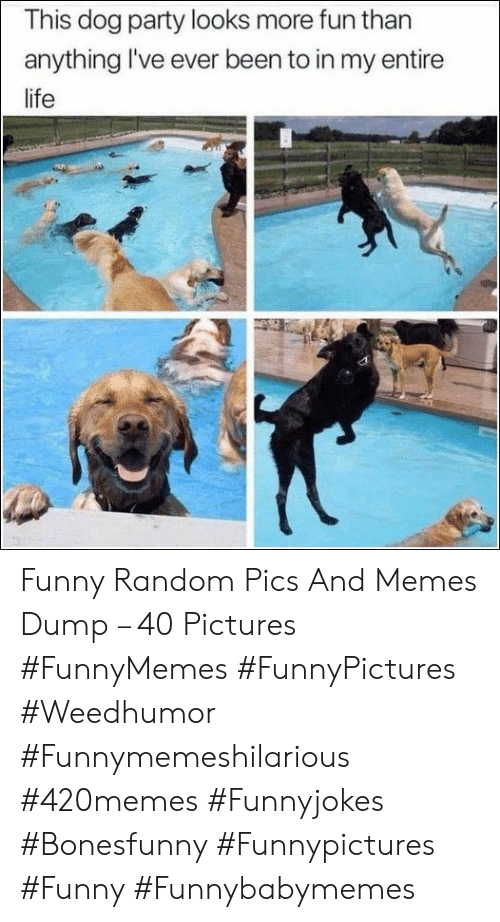 Funny, Life, and Memes: This dog party looks more fun than  anything I've ever been to in my entire  life Funny Random Pics And Memes Dump – 40 Pictures #FunnyMemes #FunnyPictures #Weedhumor #Funnymemeshilarious #420memes #Funnyjokes #Bonesfunny #Funnypictures #Funny #Funnybabymemes
