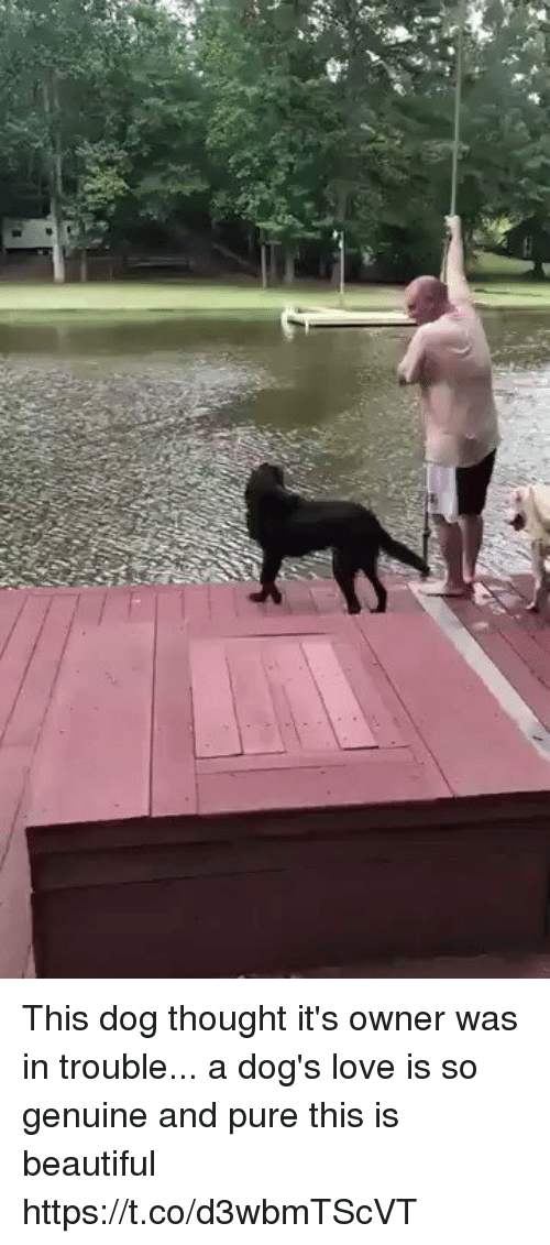 Beautiful, Dogs, and Love: This dog thought it's owner was in trouble... a dog's love is so genuine and pure this is beautiful https://t.co/d3wbmTScVT