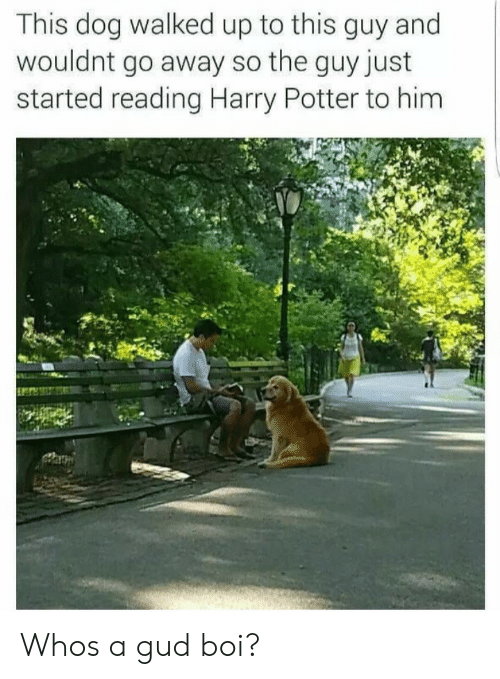 Harry Potter, Boi, and Potter: This dog walked up to this guy and  wouldnt go away so the guy just  started reading Harry Potter to him Whos a gud boi?