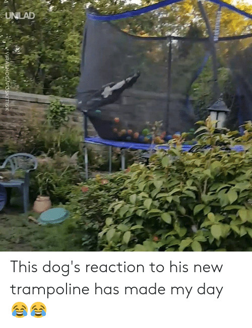 Dank, Dogs, and Trampoline: This dog's reaction to his new trampoline has made my day 😂😂