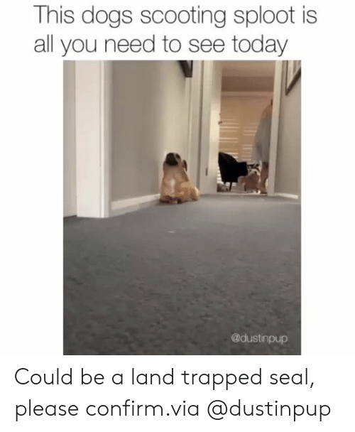 Dogs, Instagram, and Target: This dogs scooting sploot is  all you need to see today  @dustinpup Could be a land trapped seal, please confirm.via@dustinpup