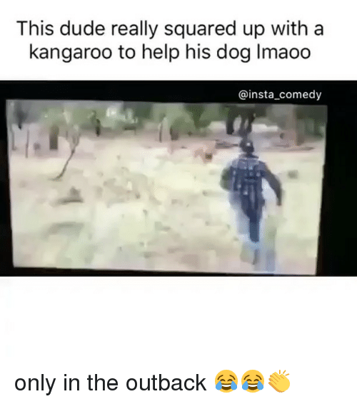 Insta Comedy: This dude really squared up with a  kangaroo to help his dog lmaoo  @insta comedy only in the outback 😂😂👏