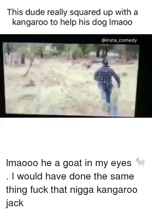 Insta Comedy: This dude really squared up with a  kangaroo to help his dog lmaoo  @insta comedy lmaooo he a goat in my eyes 🐐. I would have done the same thing fuck that nigga kangaroo jack