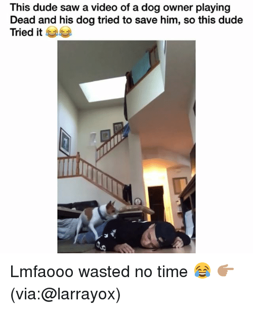 Playing Dead: This dude saw a video of a dog owner playing  Dead and his dog tried to save him, so this dude  Tried it Lmfaooo wasted no time 😂 👉🏽(via:@larrayox)
