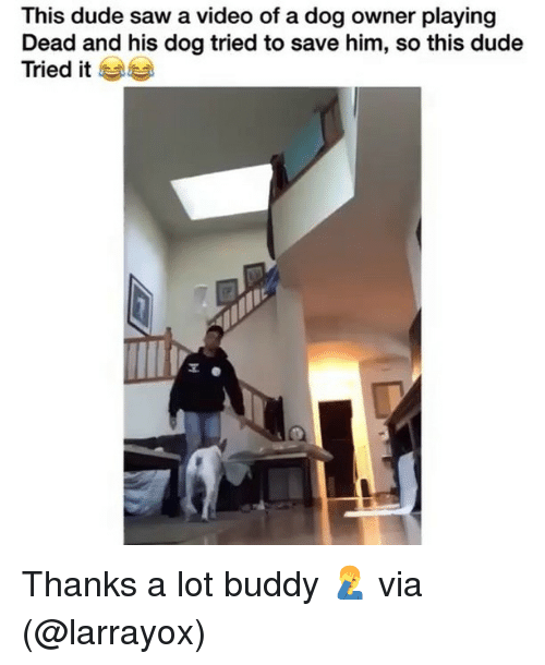 Playing Dead: This dude saw a video of a dog owner playing  Dead and his dog tried to save him, so this dude  Tried it Thanks a lot buddy 🤦♂️ via (@larrayox)