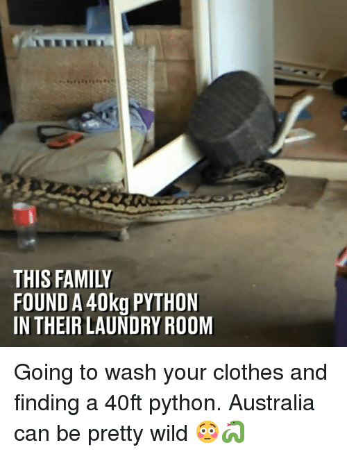 Clothes, Dank, and Family: THIS FAMILY  FOUND A 40kg PYTHON  IN THEIR LAUNDRY ROOM Going to wash your clothes and finding a 40ft python. Australia can be pretty wild 😳🐍