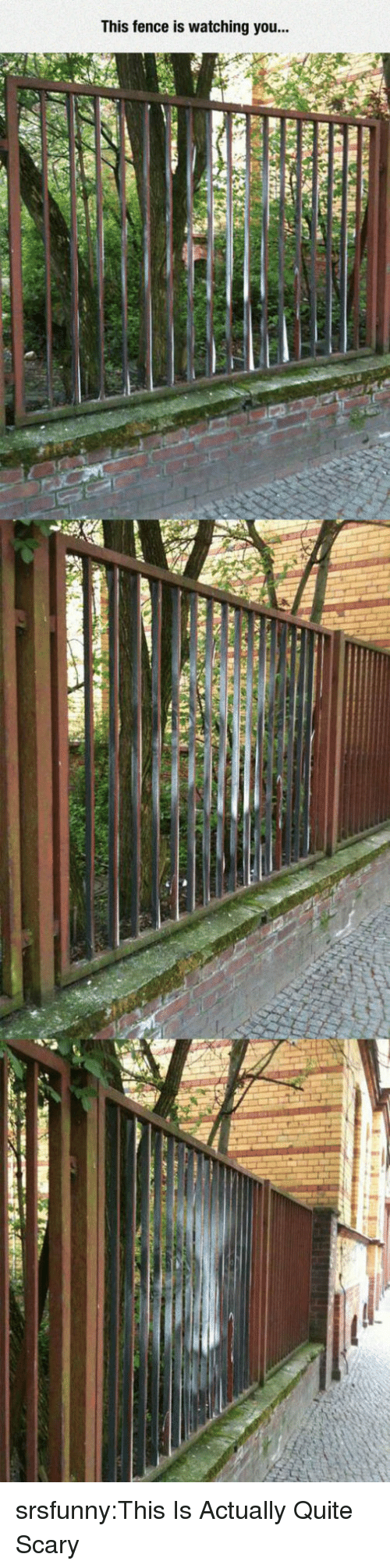 Tumblr, Blog, and Http: This fence is watching you... srsfunny:This Is Actually Quite Scary