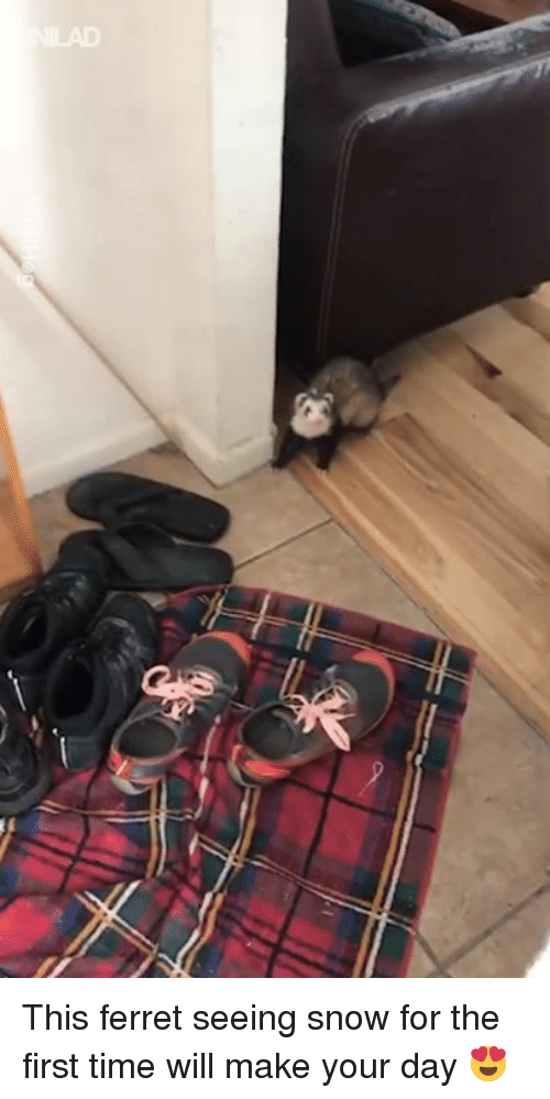 Dank, Ferret, and Snow: This ferret seeing snow for the first time will make your day 😍