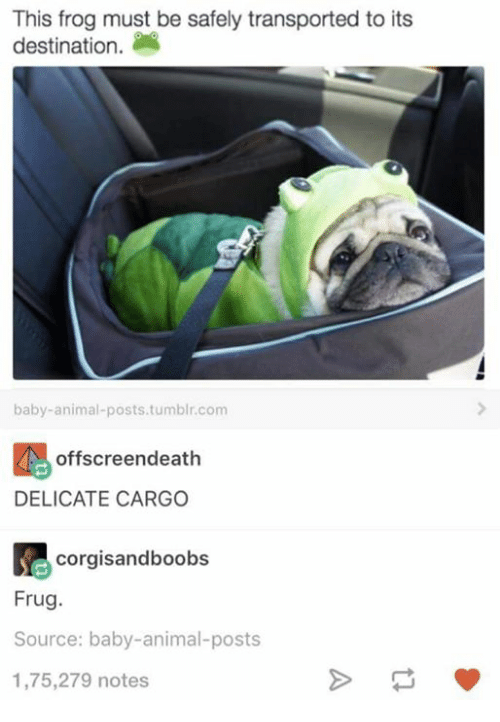 Baby Animal: This frog must be safely transported to its  destination.  baby-animal-posts.tumblr.com  offscreendeath  DELICATE CARGO  corgisandboobs  Frug  Source: baby-animal-posts  1,75,279 notes