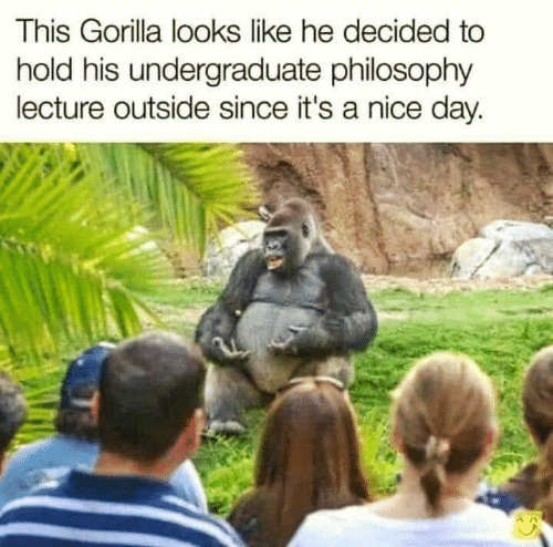 Philosophy: This Gorilla looks like he decided to  hold his undergraduate philosophy  lecture outside since it's a nice day.