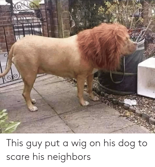 His: This guy put a wig on his dog to scare his neighbors
