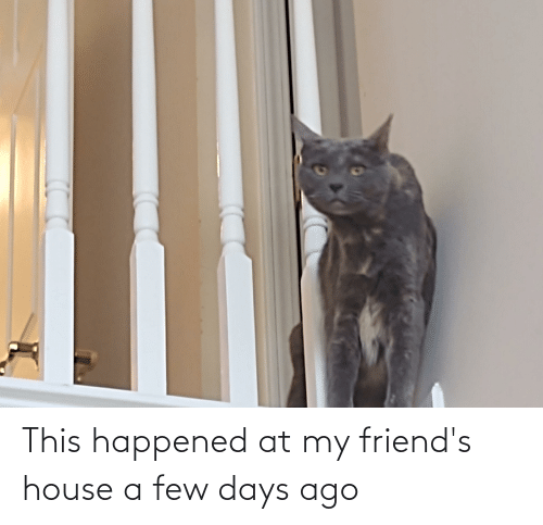 a-few-days: This happened at my friend's house a few days ago