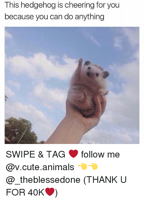 Hedgehoging: This hedgehog is cheering for you  because you can do anything SWIPE & TAG ❤️ follow me @v.cute.animals 👈👈 @_theblessedone (THANK U FOR 40K❤️)