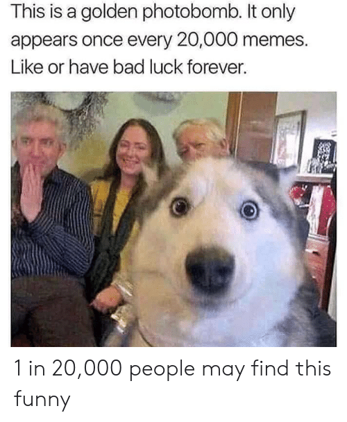 Bad, Funny, and Memes: This is a golden photobomb. It only  appears once every 20,000 memes.  Like or have bad luck forever. 1 in 20,000 people may find this funny