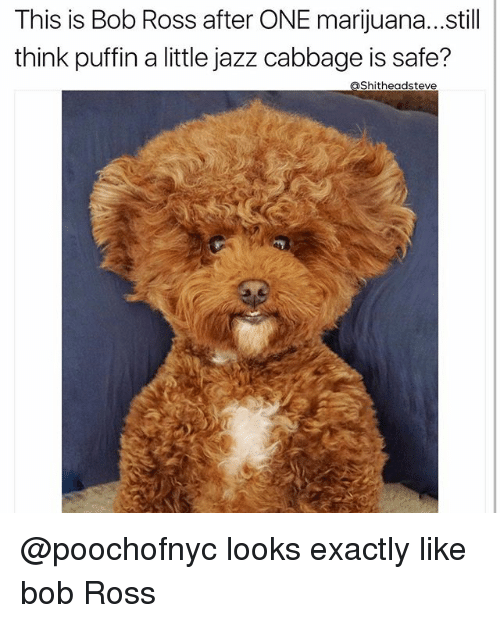 puffin: This is Bob Ross after ONE marijuana... still  think puffin a little jazz cabbage is safe?  aShitheadsteve @poochofnyc looks exactly like bob Ross