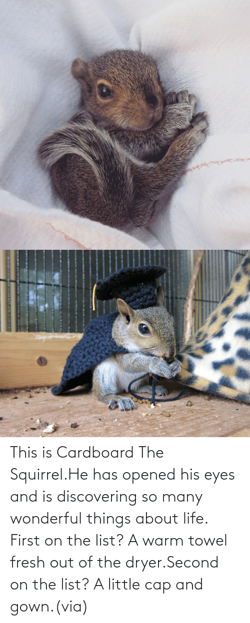 Fresh: This is Cardboard The Squirrel.He has opened his eyes and is discovering so many wonderful things about life. First on the list? A warm towel fresh out of the dryer.Second on the list? A little cap and gown.(via)