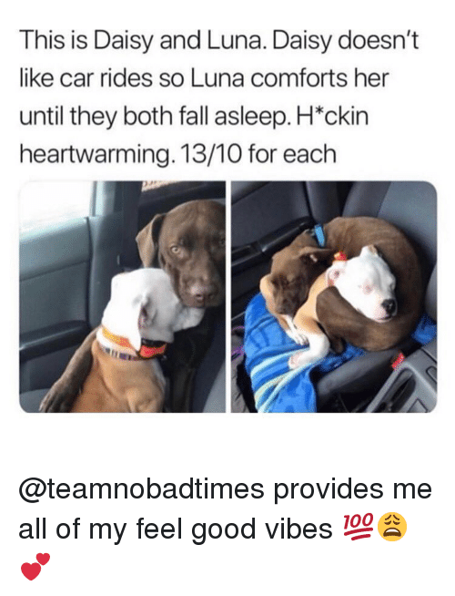 luna: This is Daisy and Luna. Daisy doesn't  like car rides so Luna comforts her  until they both fall asleep. H*ckin  heartwarming. 13/10 for each @teamnobadtimes provides me all of my feel good vibes 💯😩💕