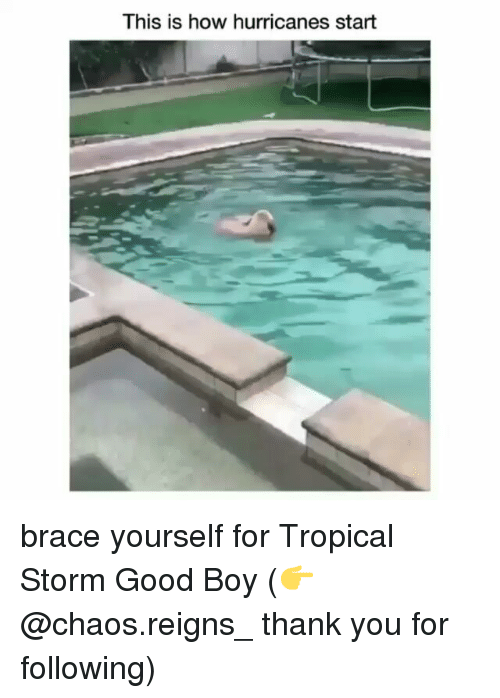 chaos reigns: This is how hurricanes start brace yourself for Tropical Storm Good Boy (👉@chaos.reigns_ thank you for following)