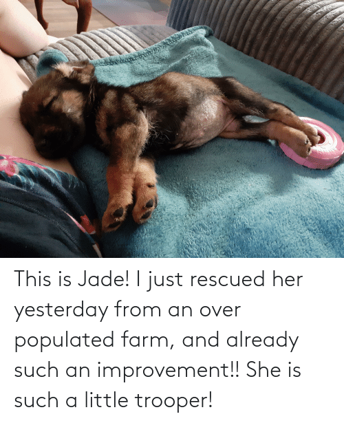 Populated: This is Jade! I just rescued her yesterday from an over populated farm, and already such an improvement!! She is such a little trooper!
