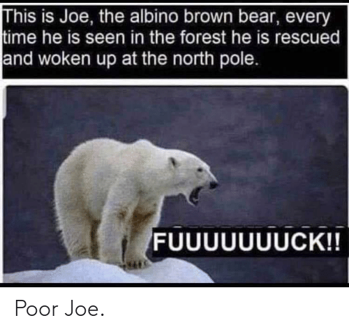 the forest: This is Joe, the albino brown bear, every  time he is seen in the forest he is rescued  and woken up at the north pole. Poor Joe.