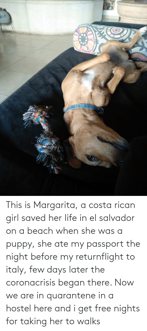 costa: This is Margarita, a costa rican girl saved her life in el salvador on a beach when she was a puppy, she ate my passport the night before my returnflight to italy, few days later the coronacrisis began there. Now we are in quarantene in a hostel here and i get free nights for taking her to walks