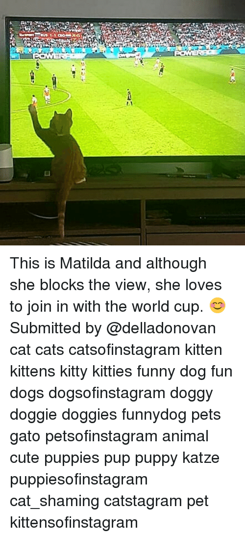 Cats, Cute, and Dogs: This is Matilda and although she blocks the view, she loves to join in with the world cup. 😊 Submitted by @delladonovan cat cats catsofinstagram kitten kittens kitty kitties funny dog fun dogs dogsofinstagram doggy doggie doggies funnydog pets gato petsofinstagram animal cute puppies pup puppy katze puppiesofinstagram cat_shaming catstagram pet kittensofinstagram