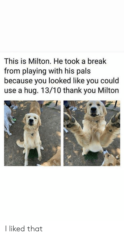 Thank You, Break, and You: This is Milton. He took a break  from playing with his pals  because you looked like you could  use a hug. 13/10 thank you Milton I liked that