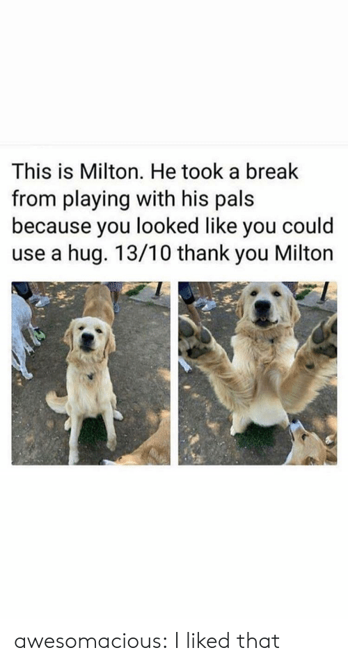 You Looked: This is Milton. He took a break  from playing with his pals  because you looked like you could  use a hug. 13/10 thank you Milton awesomacious:  I liked that