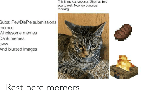 Memes Wholesome: This is my cat coconut. She has told  you to rest. Now go continue  meming!  Subs: PewDiePie submissions  memes  Wholesome memes  Dank memes  aww  And blursed images Rest here memers