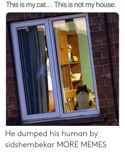 Dank, Memes, and My House: This is my cat.... This is not my house. He dumped his human by sidshembekar MORE MEMES
