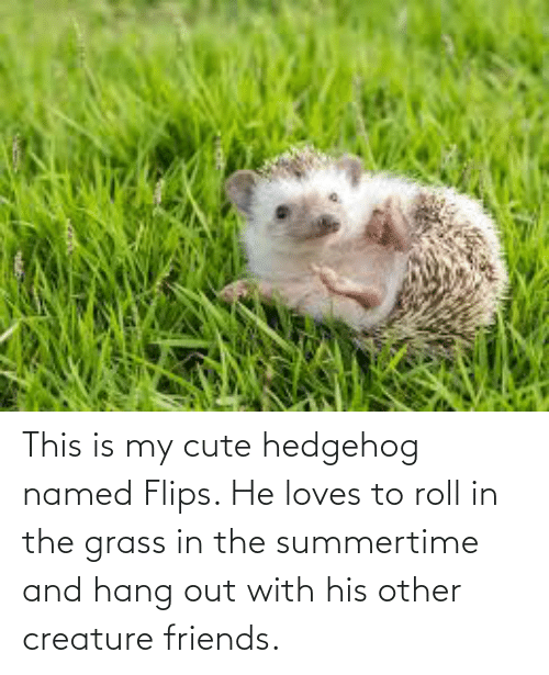 Flips: This is my cute hedgehog named Flips. He loves to roll in the grass in the summertime and hang out with his other creature friends.