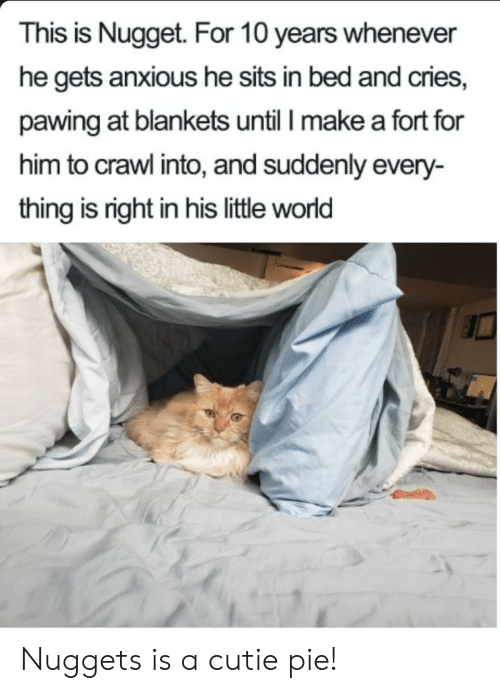 Fort: This is Nugget. For 10 years whenever  he gets anxious he sits in bed and cries,  pawing at blankets until I make a fort for  him to crawl into, and suddenly every-  thing is right in his little world Nuggets is a cutie pie!